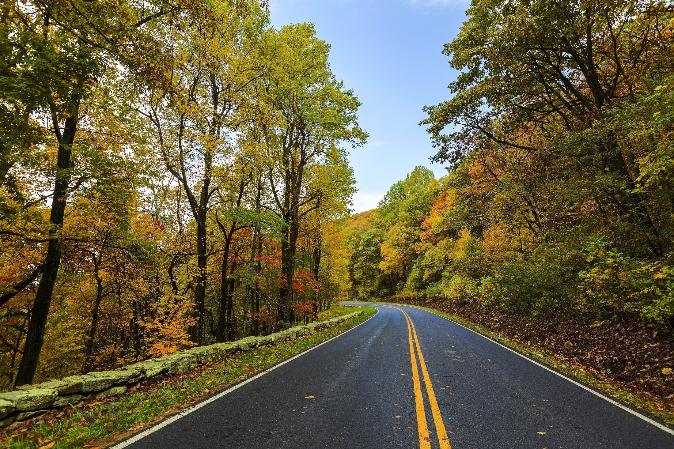 asphalt-autumn-beauty-237018.jpg